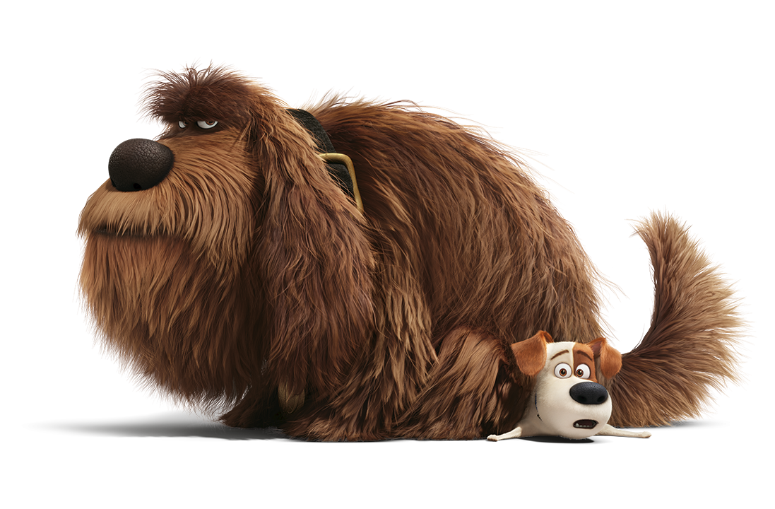 win a trip to new york   the secret life of pets pets at home